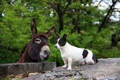 Donkey and dog. Beautiful donkey and small pretty dog on Scottish countryside, landscape Stock Images