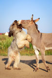 Donkey and dog Royalty Free Stock Image