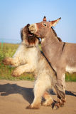 Donkey and dog Royalty Free Stock Photos