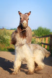 Donkey and dog Royalty Free Stock Photography