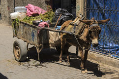 Donkey with donkey cart and garbage Royalty Free Stock Photography