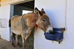 Donkey royalty free stock images