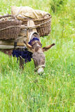 A donkey eating in a field Stock Image