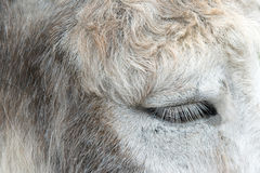 Donkey eye Royalty Free Stock Images