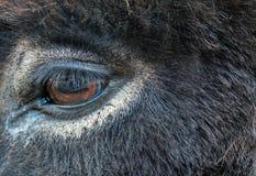 Donkey Eye Royalty Free Stock Image