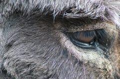 Donkey Eye Royalty Free Stock Photography