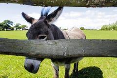 Donkey Eyes. The Nice Donkey Eyes on the farm royalty free stock images