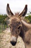Donkey face. Donkey looking around - Verona (Italy Stock Images
