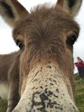 Donkey face close-up Stock Image