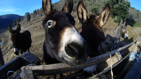Donkey face. Group of donkeys living outside by the river Royalty Free Stock Images