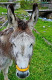 Donkey face Stock Photo