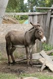Donkey on the farm Royalty Free Stock Photos