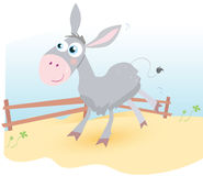 Donkey on farm Royalty Free Stock Photos