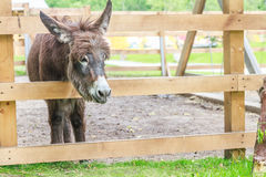 Donkey on farm Stock Images