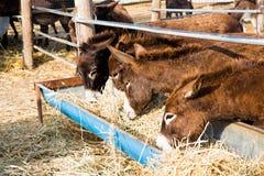 Donkey farm at Cyprus Royalty Free Stock Photography