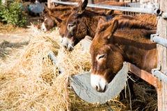 Donkey farm at Cyprus Stock Photos