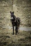 Donkey on a farm Royalty Free Stock Photography