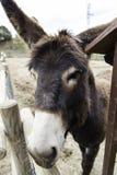 Donkey on a farm Royalty Free Stock Photos