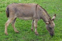 Donkey at the farm Stock Photo