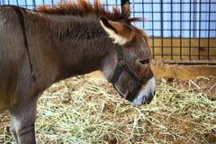 Donkey on Farm Stock Images