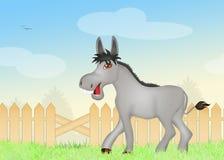 Donkey in the farm Stock Photos