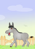 Donkey in the farm Stock Photo