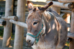 Donkey on a farm Royalty Free Stock Photos