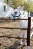 Donkey on farm Stock Photography