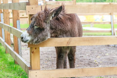 Donkey on farm, wooden fence Royalty Free Stock Images