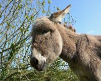 Donkey, Fauna, Horse Like Mammal, Wildlife