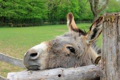 Donkey, Fauna, Horse Like Mammal, Wildlife Stock Photos