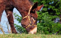 Donkey, Fauna, Wildlife, Horse Like Mammal Stock Photos