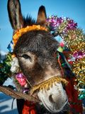 Donkey at the feast. A house donkey who was dressed in honor of the spring holiday Stock Photo