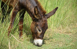 Donkey! Royalty Free Stock Photos