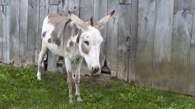 Donkey at Fence stock image