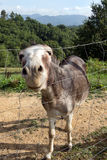 Donkey in field with bg smile it seems. Stock Photos