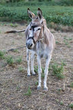 Donkey in a Field in sunny day. Animal series. Selective Focus Royalty Free Stock Photo