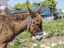 Donkey in the field Royalty Free Stock Photos