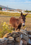 Donkey on the field with wildflowers. Mykonos. Greece. Stock Photo