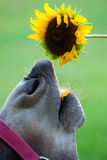 Donkey & flower Stock Image