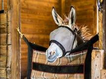 Donkey Fly Guard Royalty Free Stock Photo