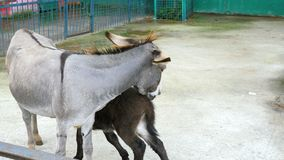 A donkey and a foal.