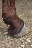 Donkey foot Royalty Free Stock Images