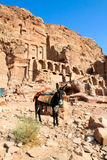 Donkey in front of Silk Tombs, Petra Stock Images