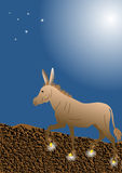 Donkey with golden hooves Stock Image