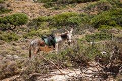 Donkey on Gramvousa island Stock Photography