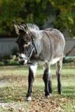 Donkey on grass Stock Image
