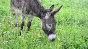 Donkey graze pasture rain Stock Photo