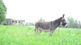 Donkey graze pasture rain Royalty Free Stock Photos