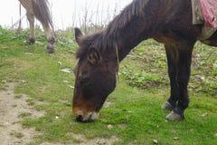 Donkey grazes on green grass stock photo
